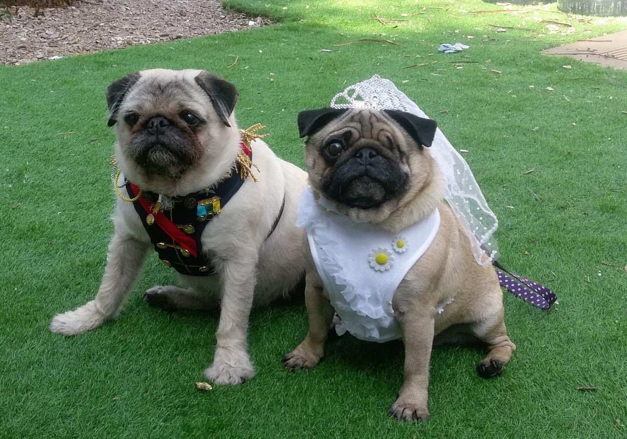 Alfie and Poppy  @alfiethehairypug