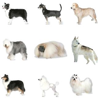 bog breeds.png