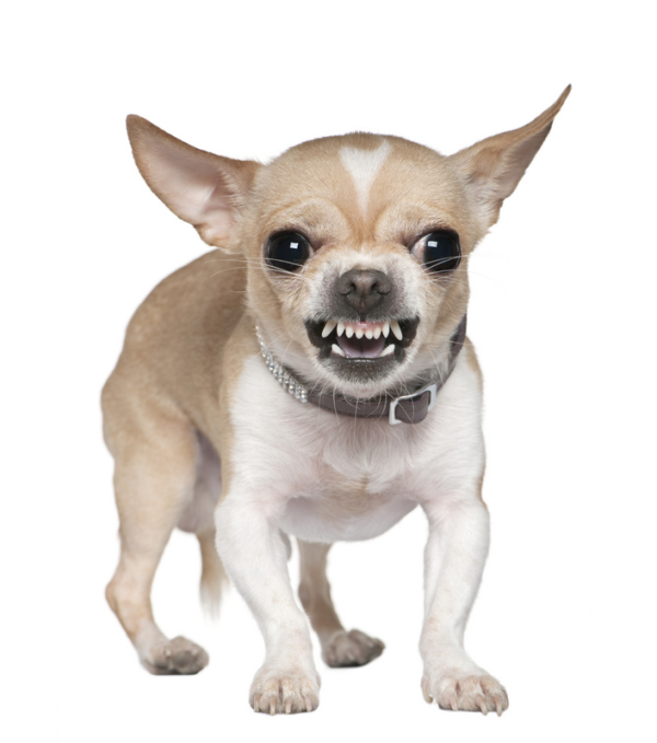 cute mean dog.png