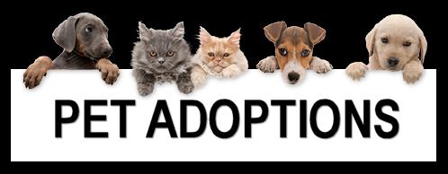 pet adoption.png