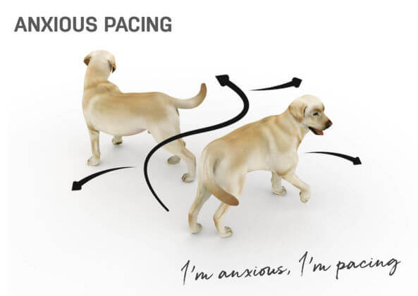 anxious dog.jpg
