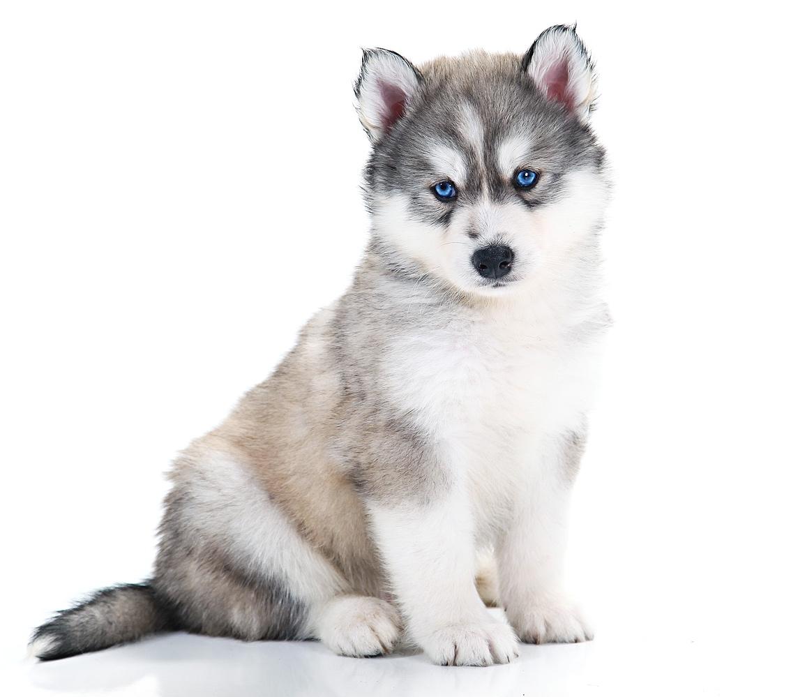 puppy-care