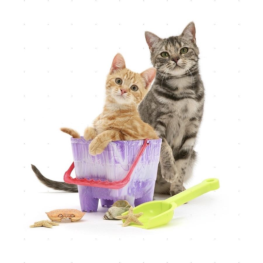 cats+in+summer.jpg