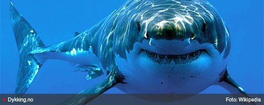 shark_bred