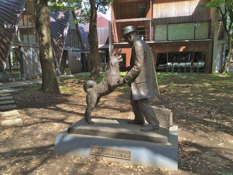 Denne statuen står utanfor arbeidsstaden til professor Ueno ved Universitetet i Tokyo, og viser ein glad Hachiko som møter att professoren sin og hoppar lukkeleg mot han.
