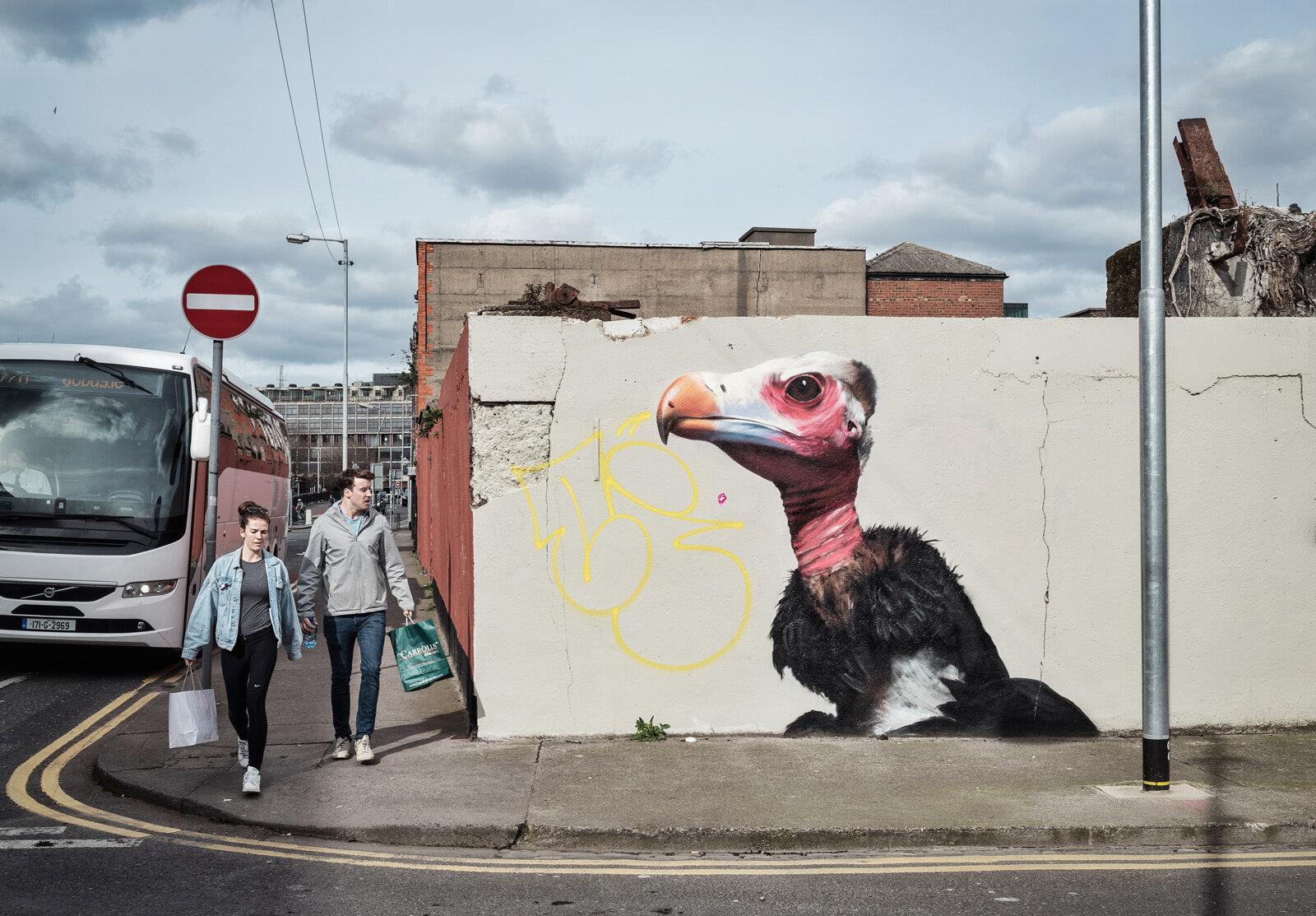 VultureMural-.jpg