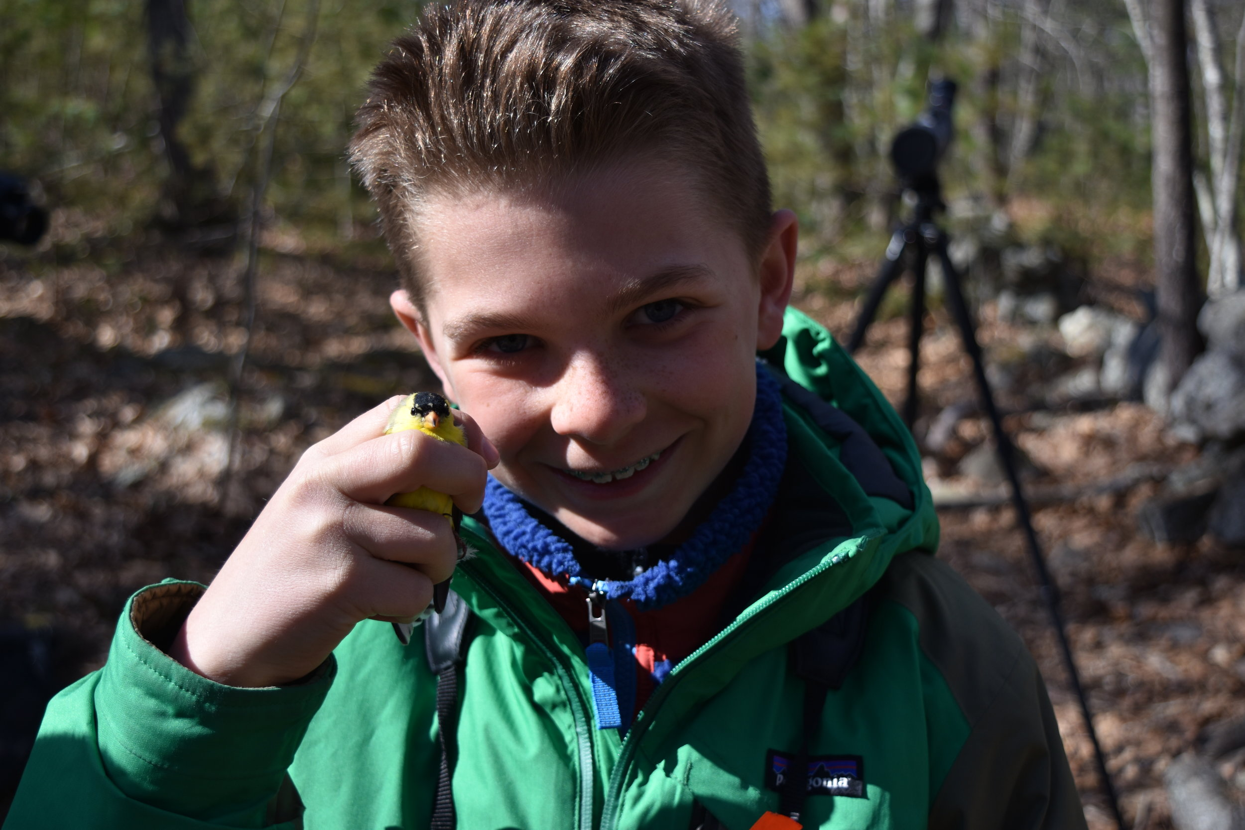 Ian showing his excitement for holding the one of the several goldfinches we banded
