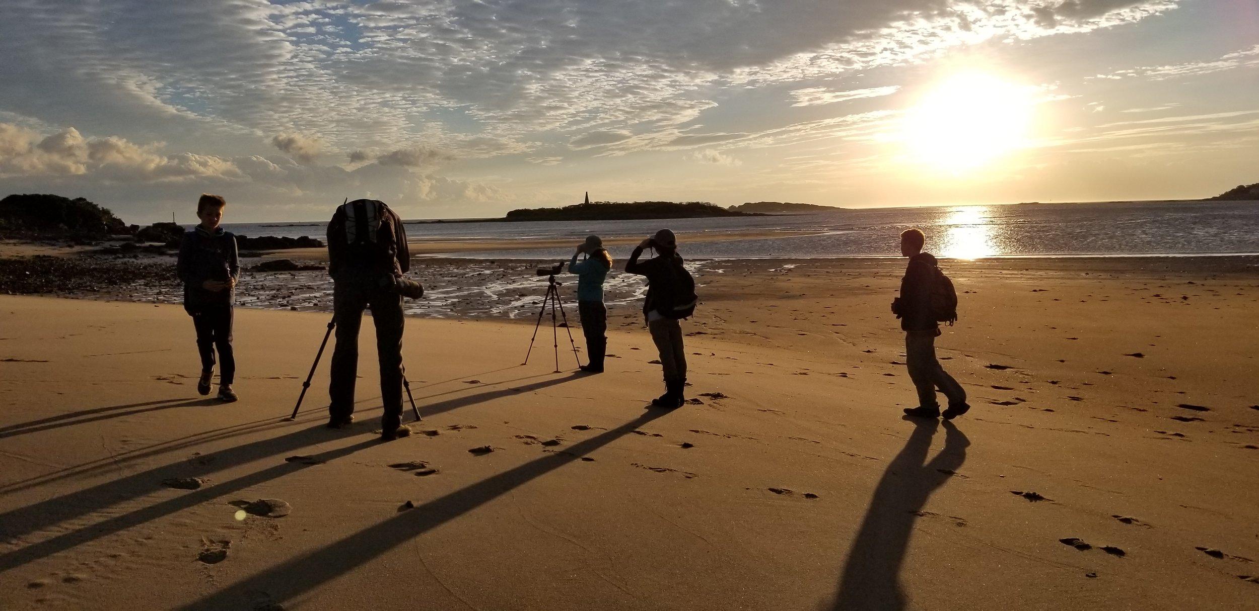 Scanning for shorebirds at sunrise