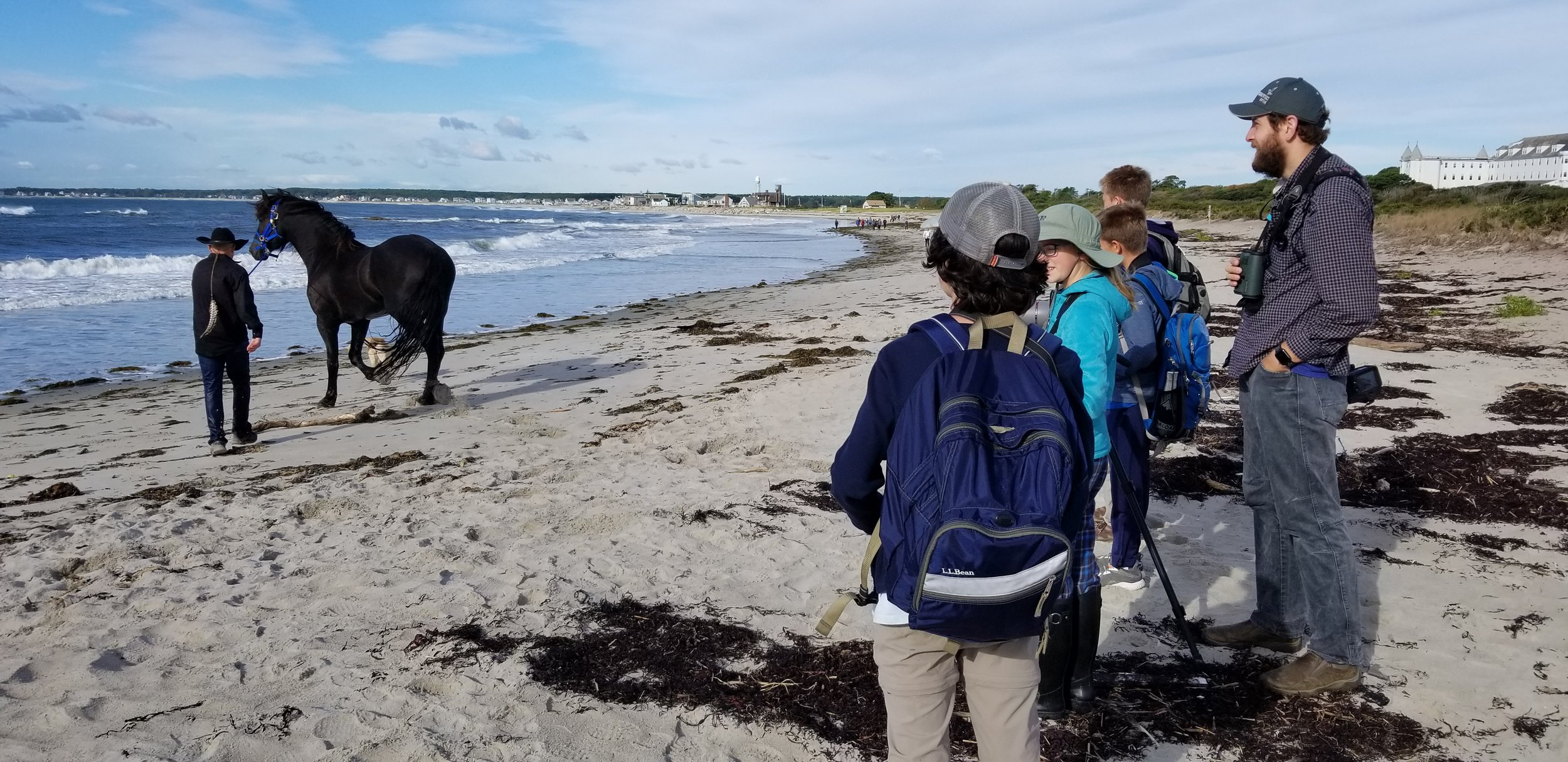 We were a bit puzzled by the horse on the beach.