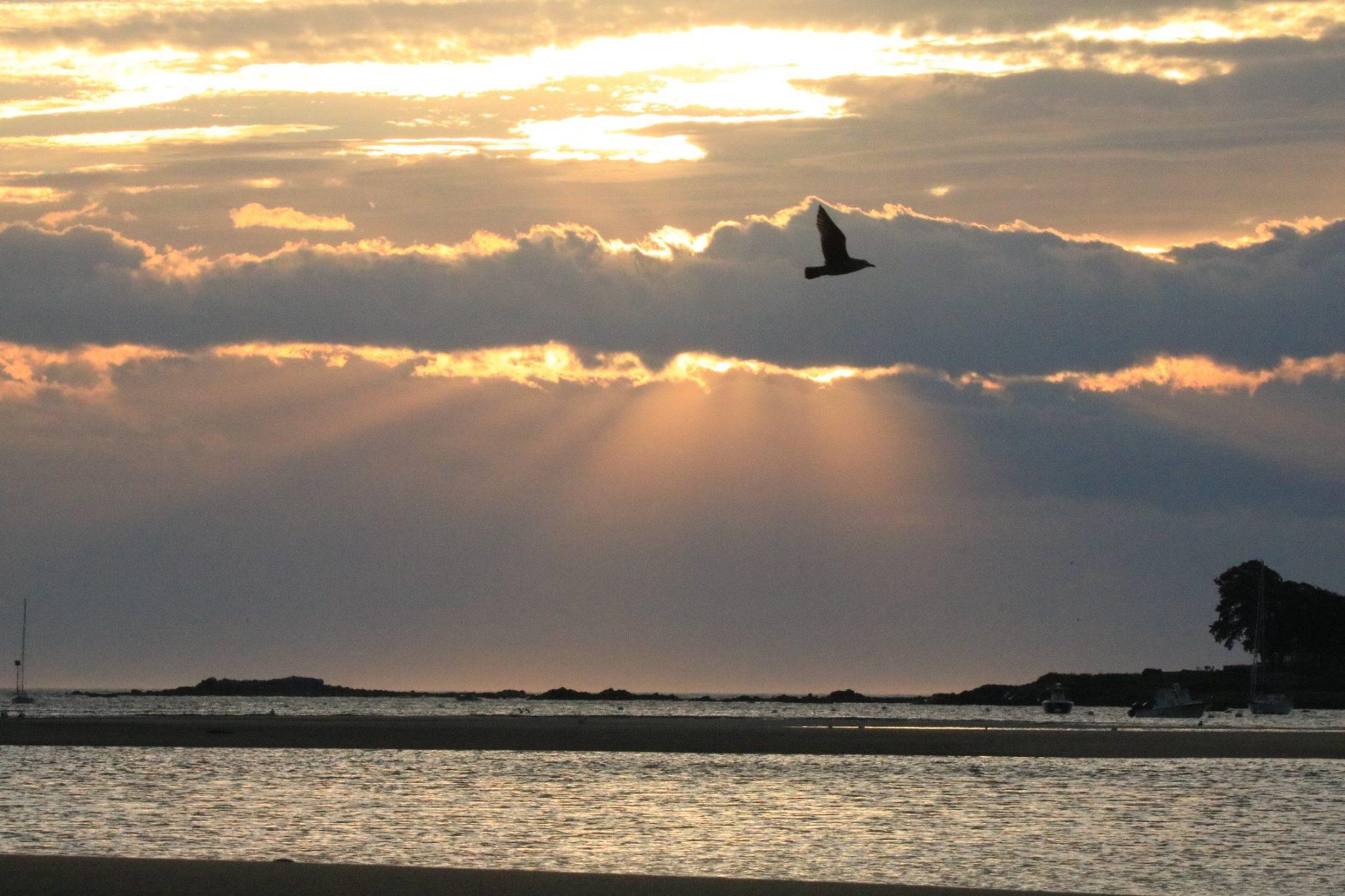 Gull flying through the sunrise