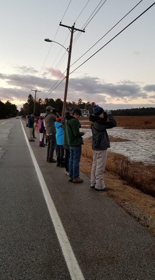 Scanning the marsh