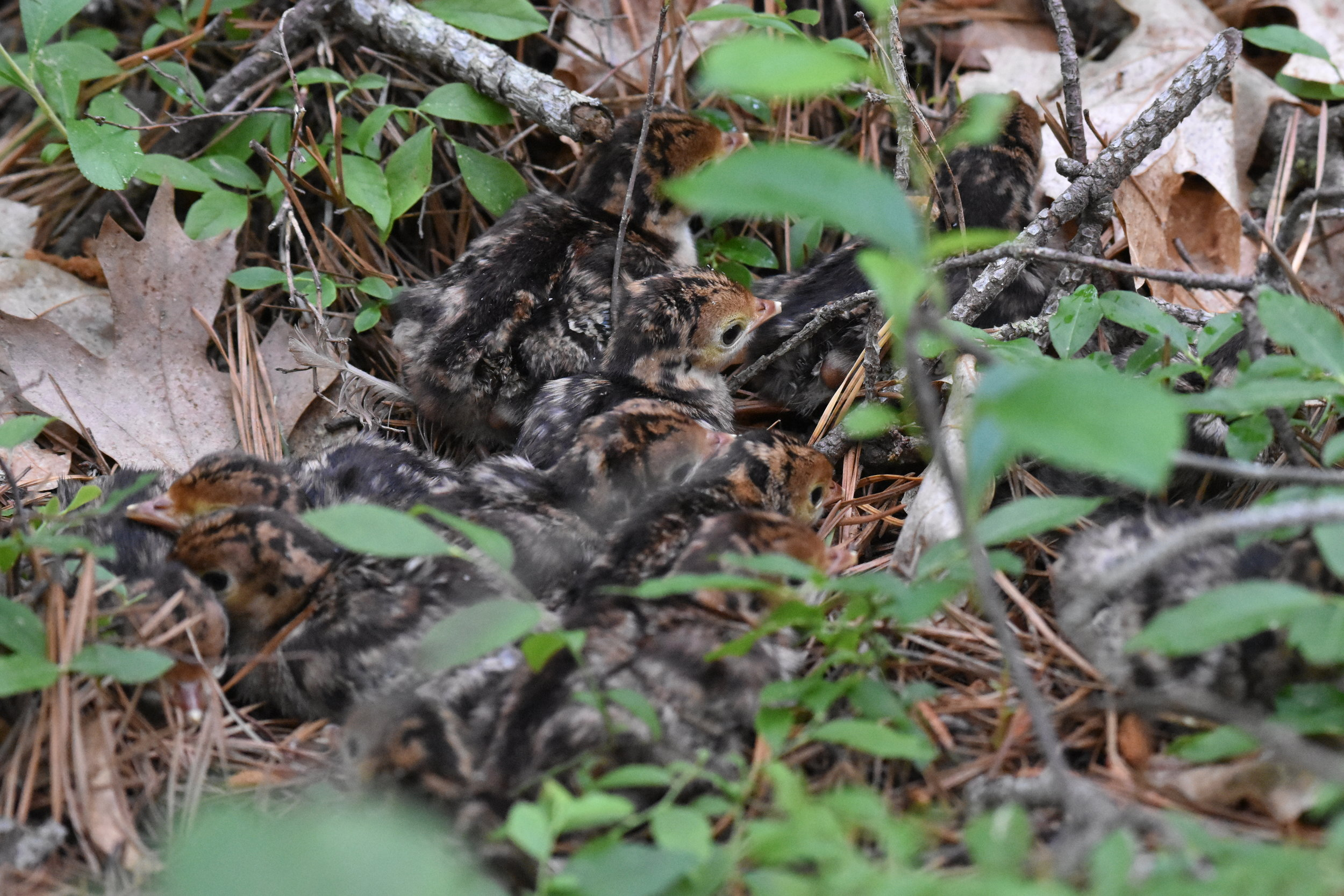 TRIP REPORTS — Maine Young Birders Club