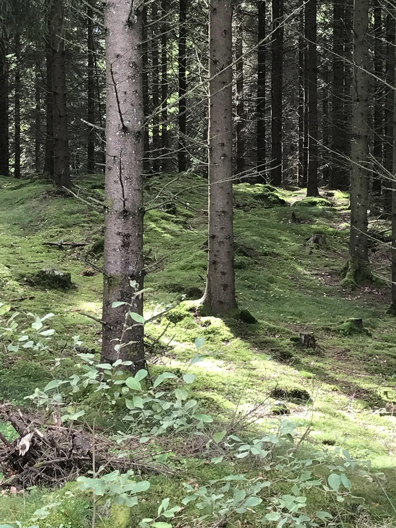 Natur1 800.JPG