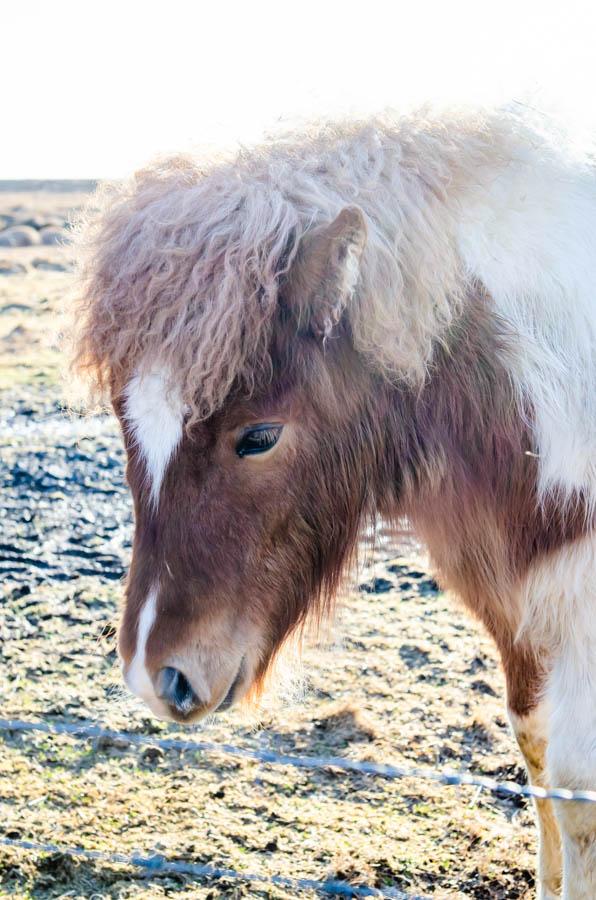 JemmaDodd_Iceland_Reykjavik-6966.jpg