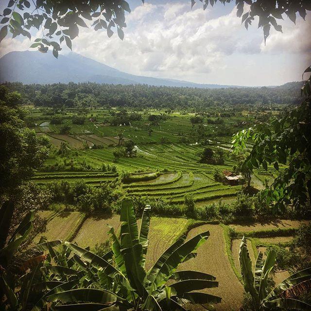 Ces rizières sont inscrites sur la liste du patrimoine de l'Unesco en tant qu'éléments emblématiques de la culture traditionnelle du riz à Bali! #bali #riziere #voyeur #ubud