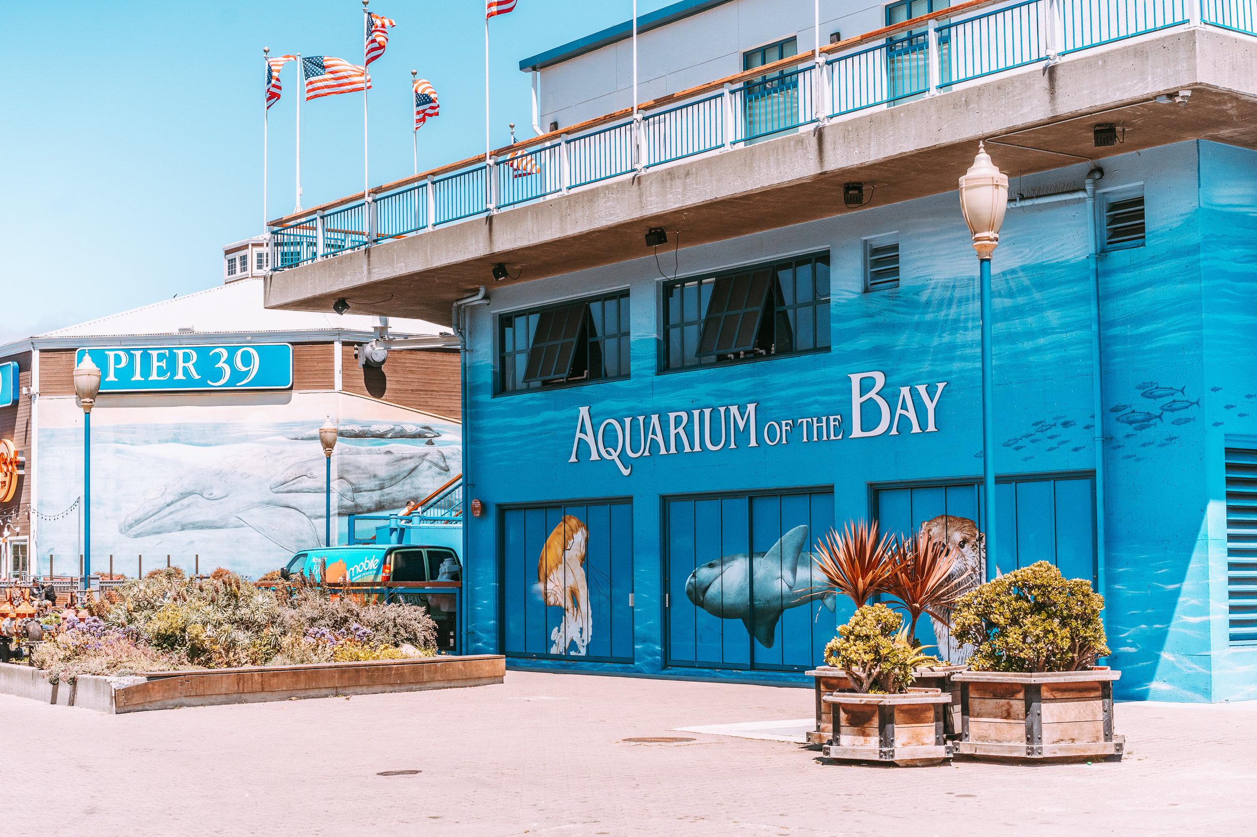 Aquarium of the Bay-1.jpg