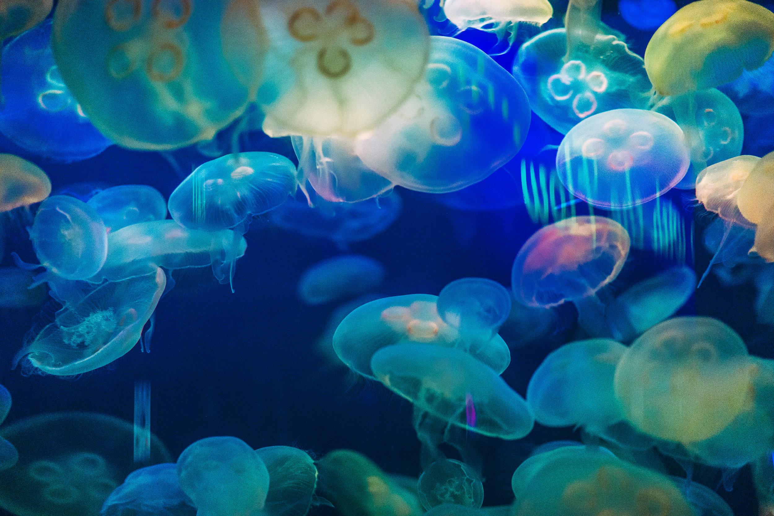 Aquarium of the Bay-6.jpg