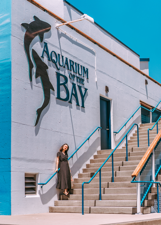 Aquarium of the Bay-11.jpg