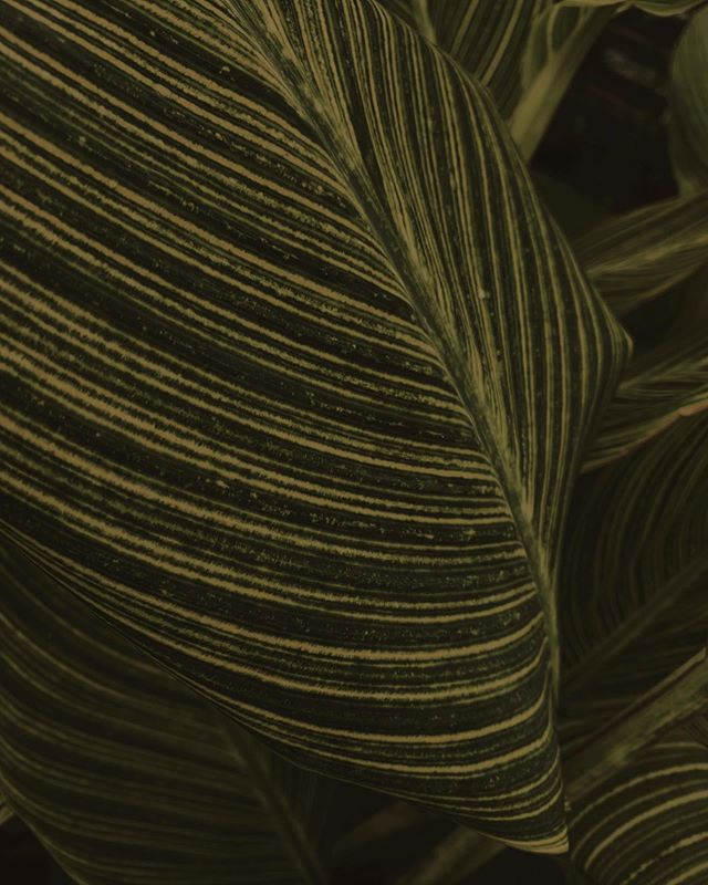 We are all born to die. . . . . . #plants #texture #mood #postfortheaesthetic #verilymoment #momentsofmine #love #myunicornlife #feelfreefeed #instadaily #artsy #inspo #style #simplicity #finditliveit #slowliving #embracingaslowerlife #simplemoments #aquietstyle #calmversation #artofslowliving #visualsoflife #searchwandercollect #smallmomentsofcalm #lifequotes #summertimesadness