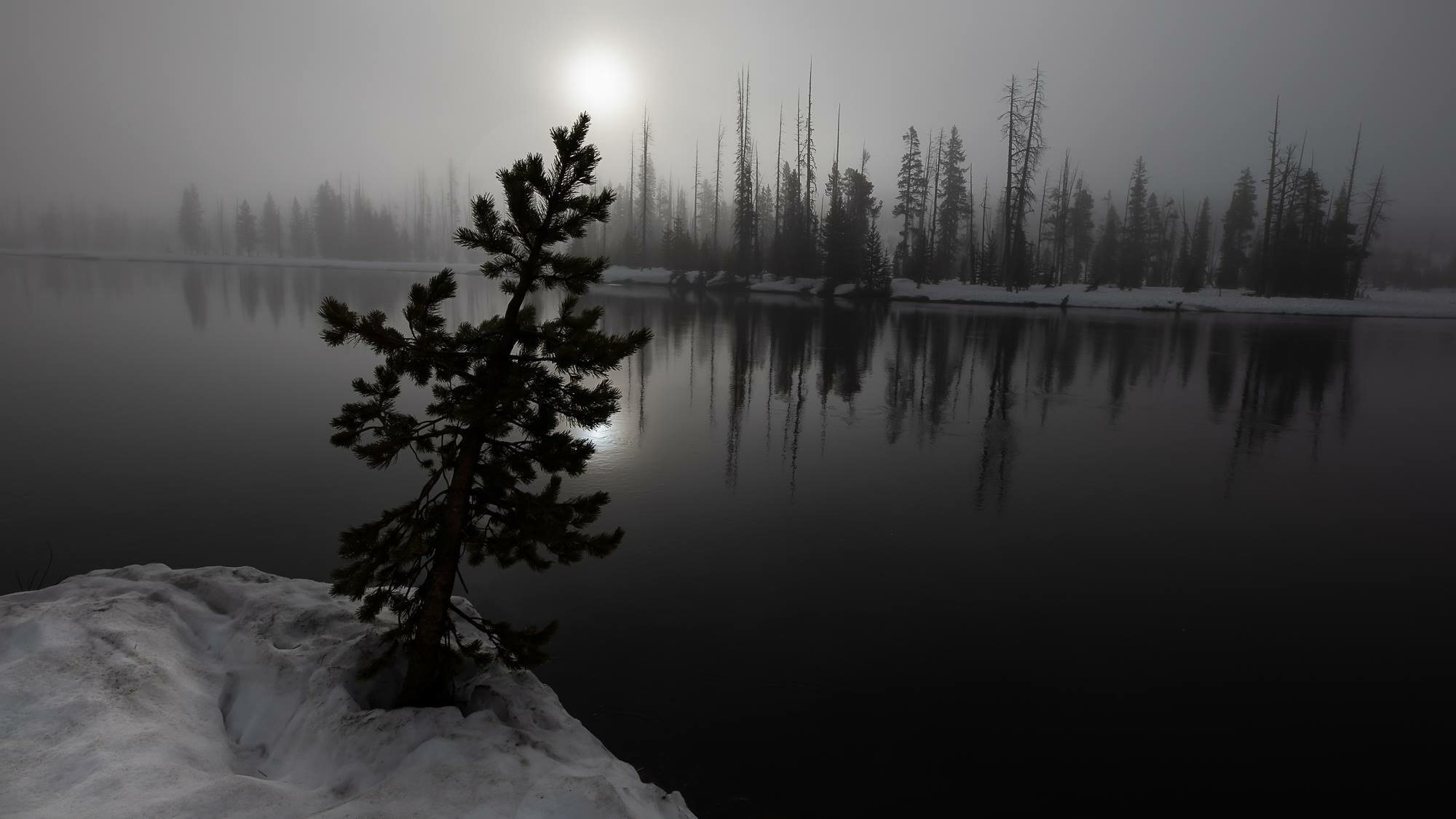 The fog made for a great moody shot. It was hard not to stop and take photos.