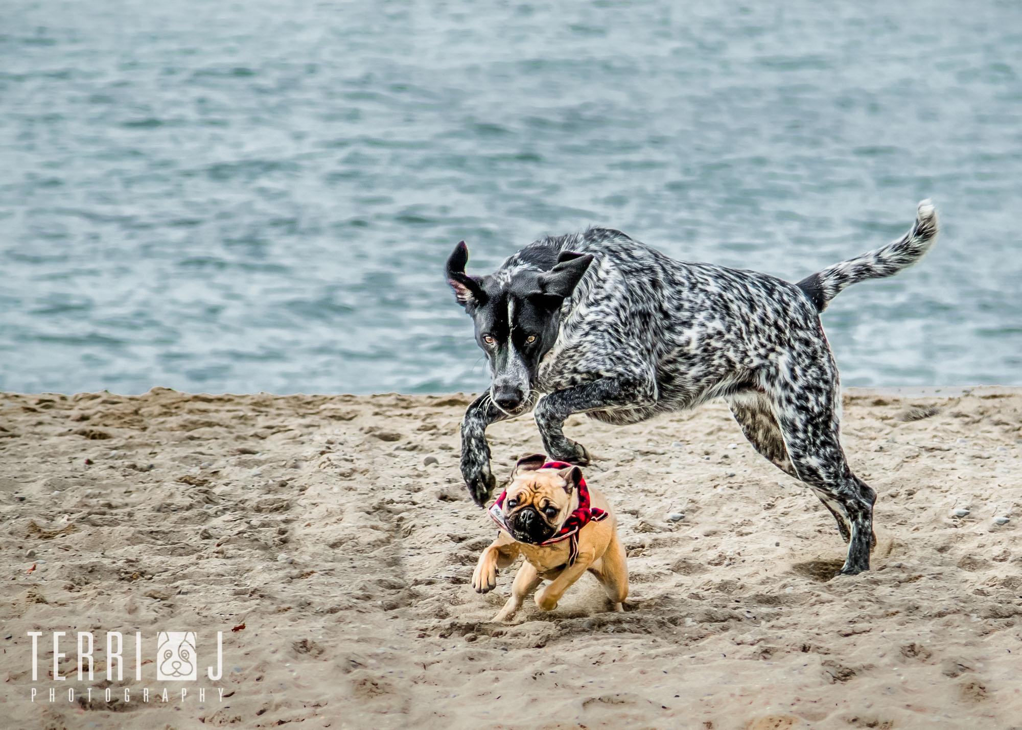 dog photography toronto beach.jpg
