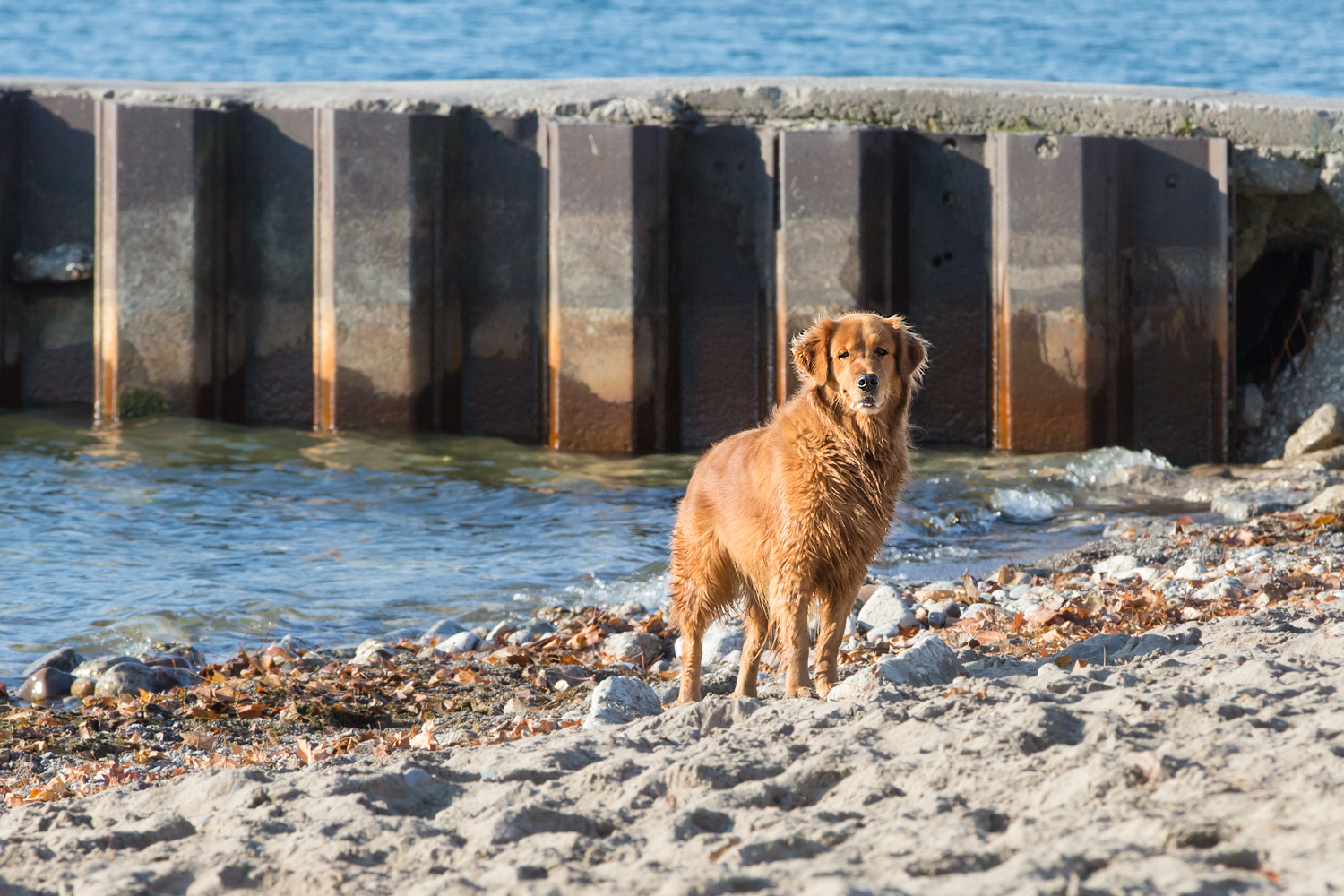 Your dog will love a run at the beach!