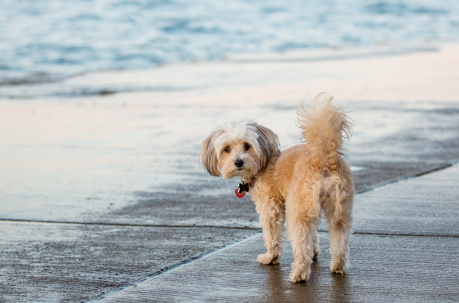 Cute dog at The Beach in Toronto