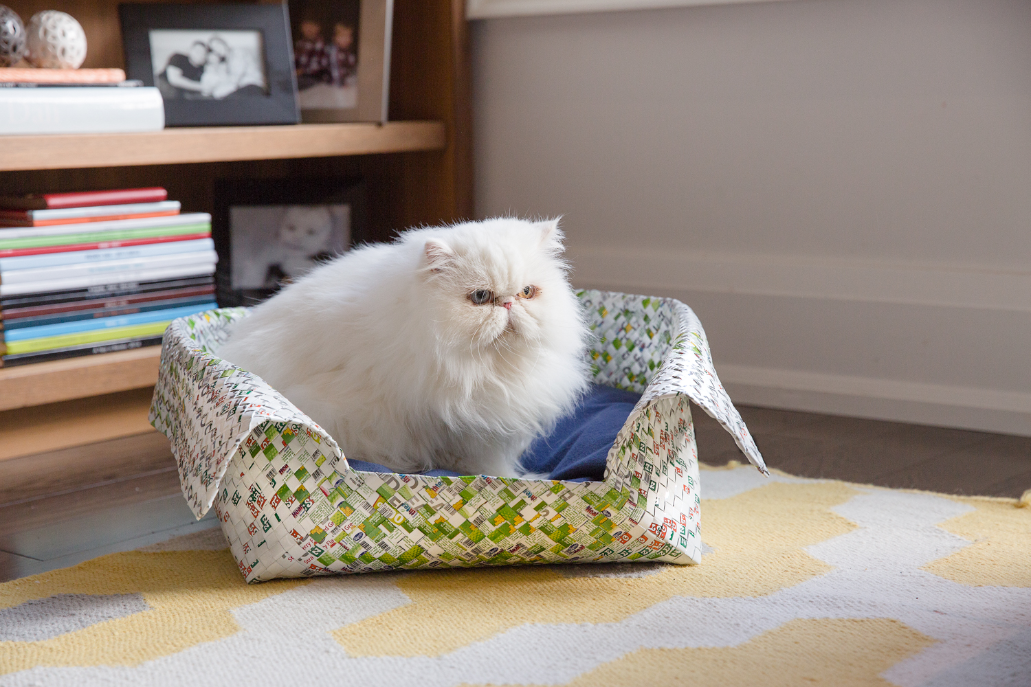 White cat lies in a pet bed