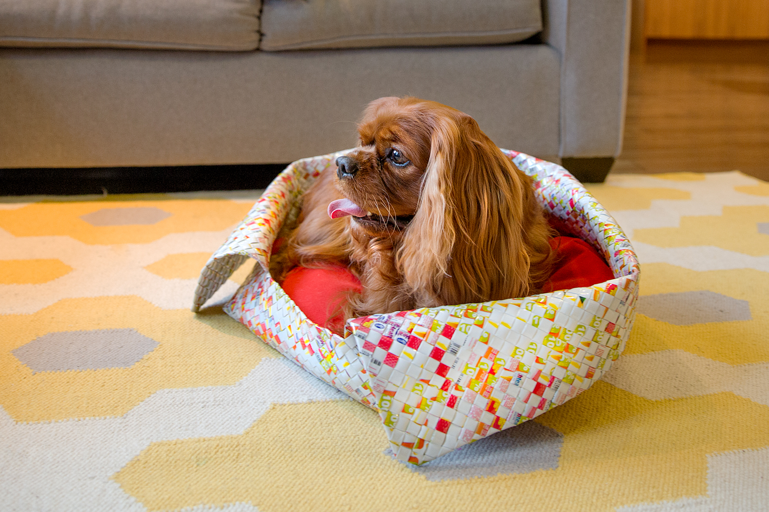 Cavalier King Charles in a dog bed
