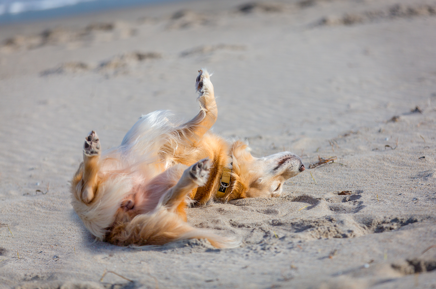 A roll in the warm sand feels so good!!