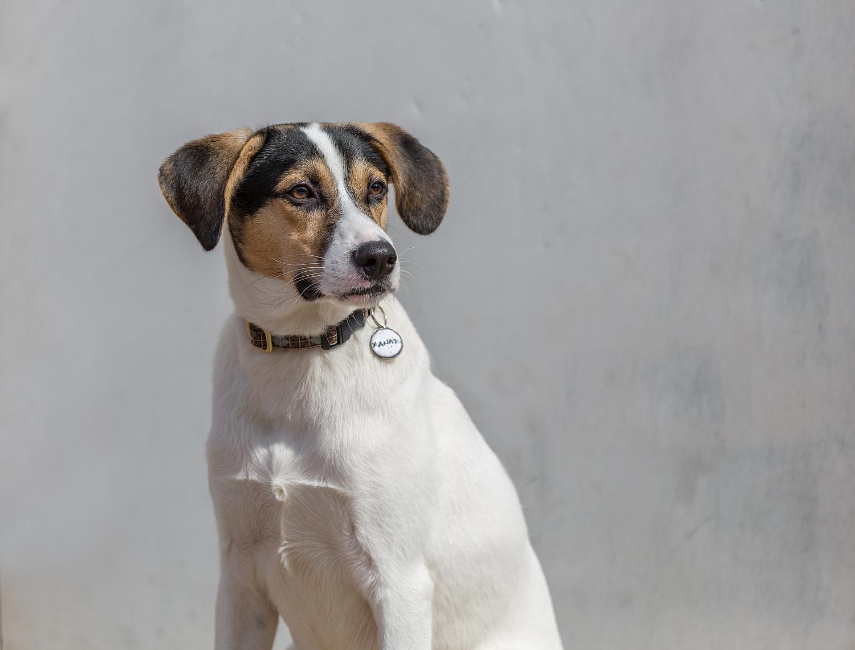 Shelter-dog-Toronto