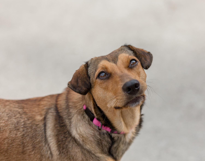 Dog-photographed-at-shelter-Toronto