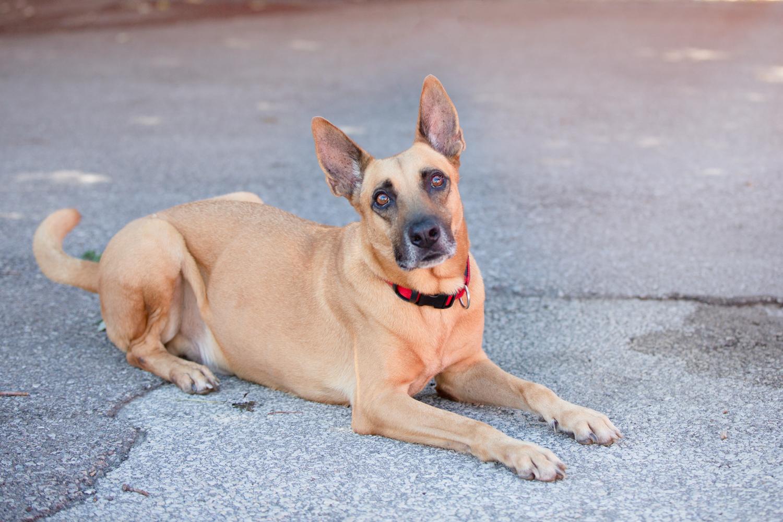 Rescue-dog-photography-Toronto