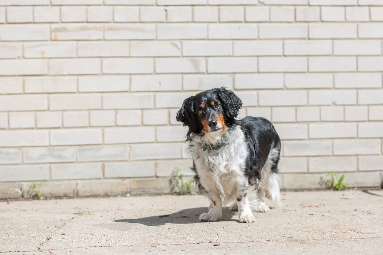 Toronto-shelter-dog-photographer