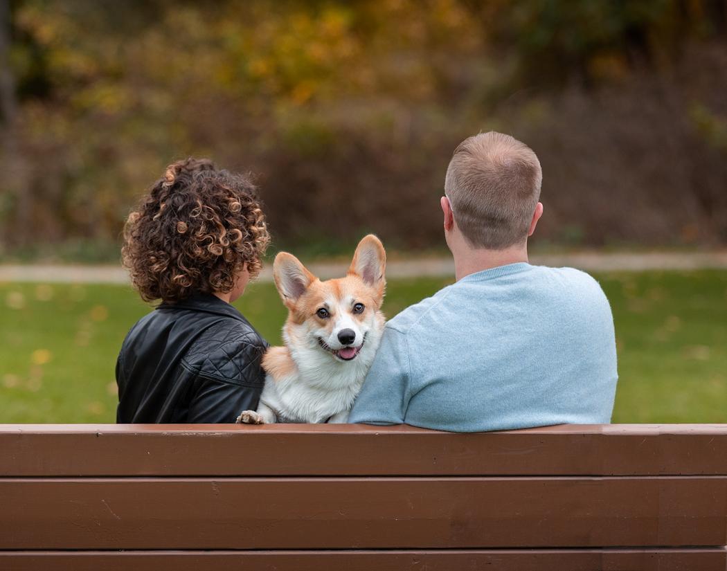 Dog-smiling-Pet-photographers-Toronto