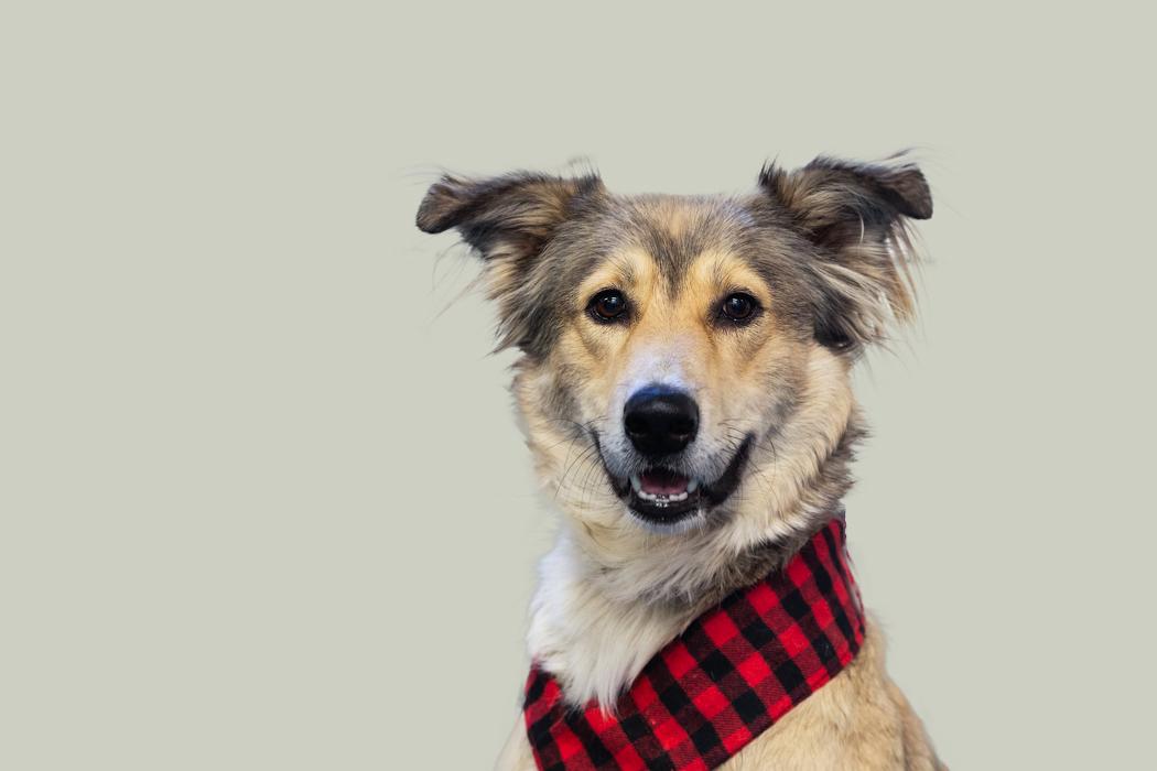 Cute-dog-wearing-scarf