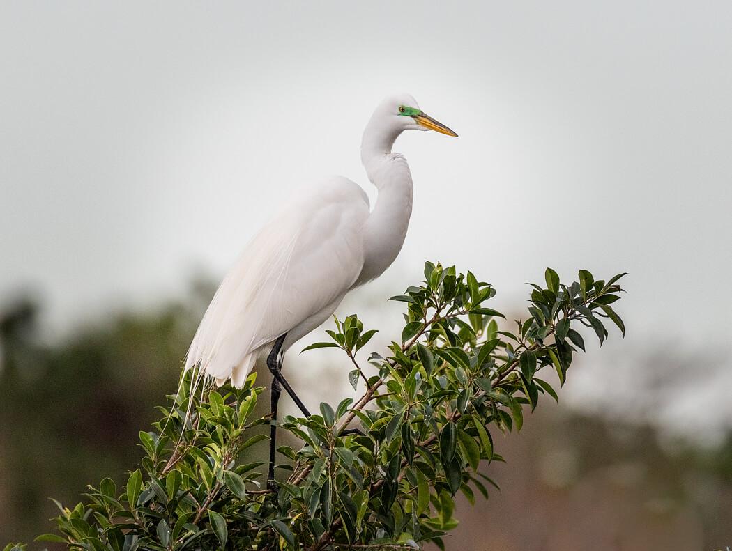 Florida_wildlife-birds (1 of 3).jpg