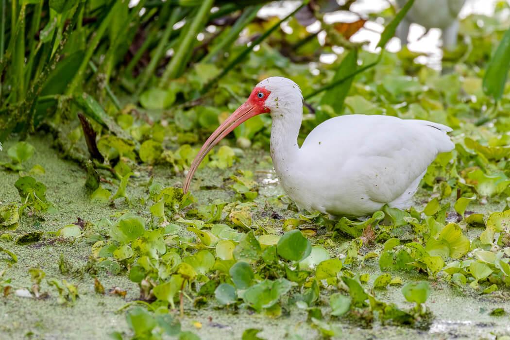 Florida_wildlife-birds (2 of 3).jpg