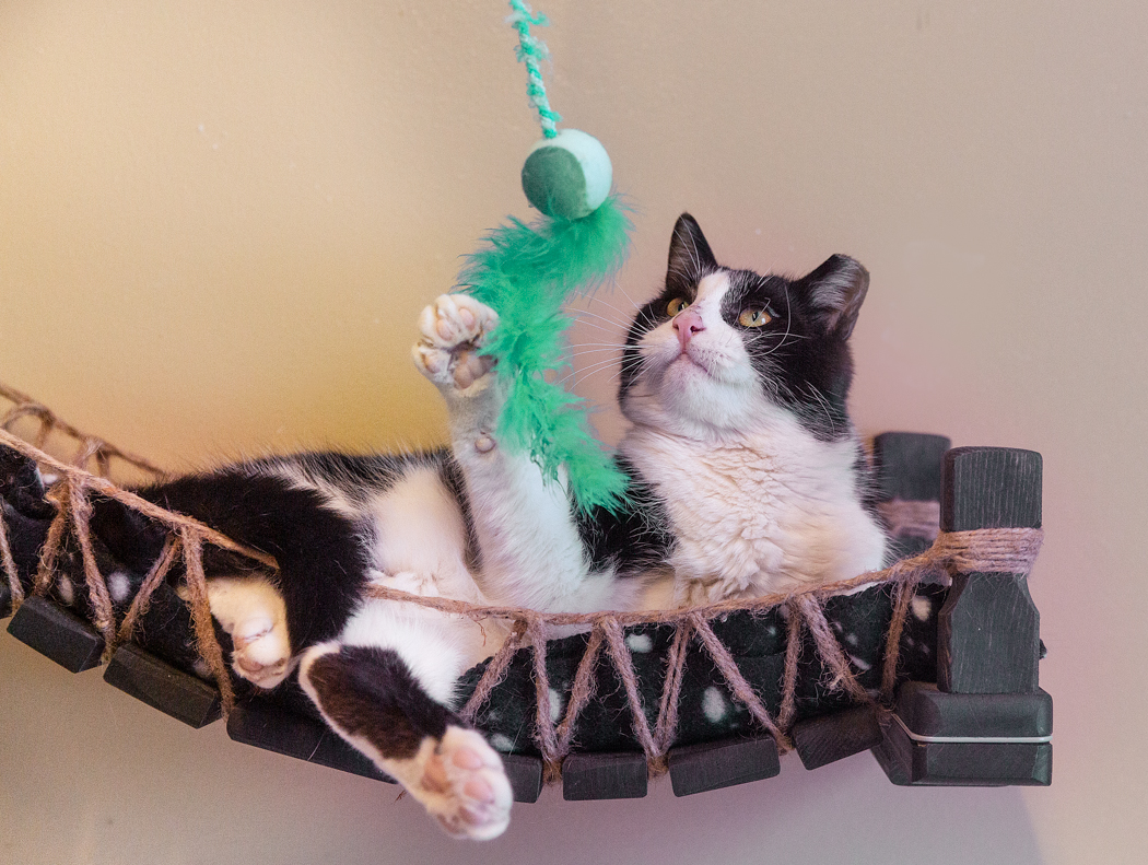 Cat-playing-toy-Toronto-pet-photography.jpg