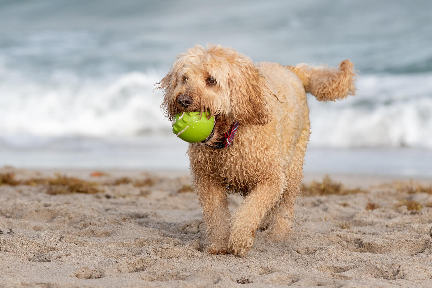 Dog-at-play-Boca-Raton-Beach-photography