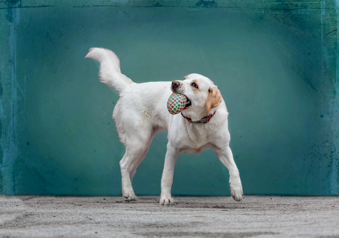 dog-photography-playing-ball