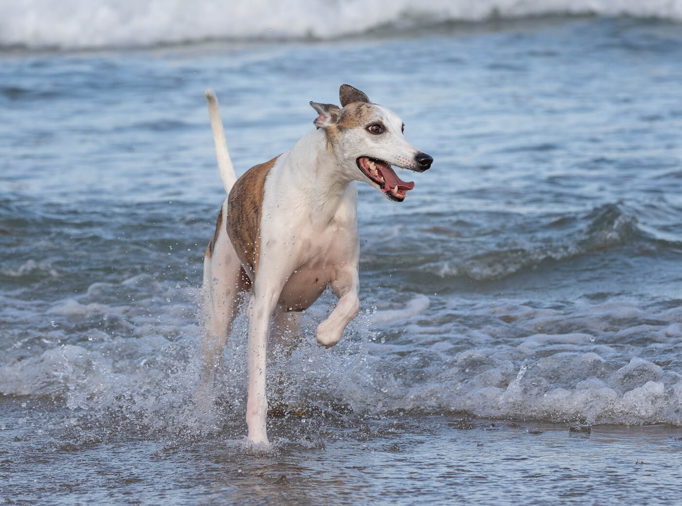 Boca-Raton-dog-photographer