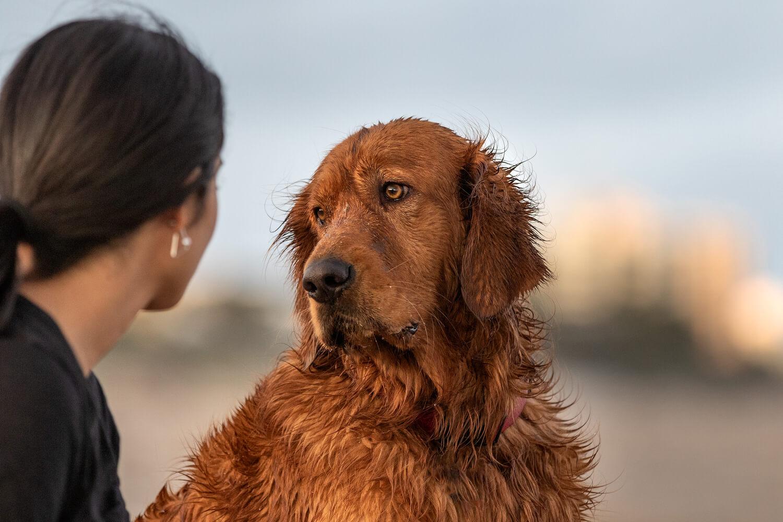 Dog-and-People-Photography-Boca-Raton.jpg