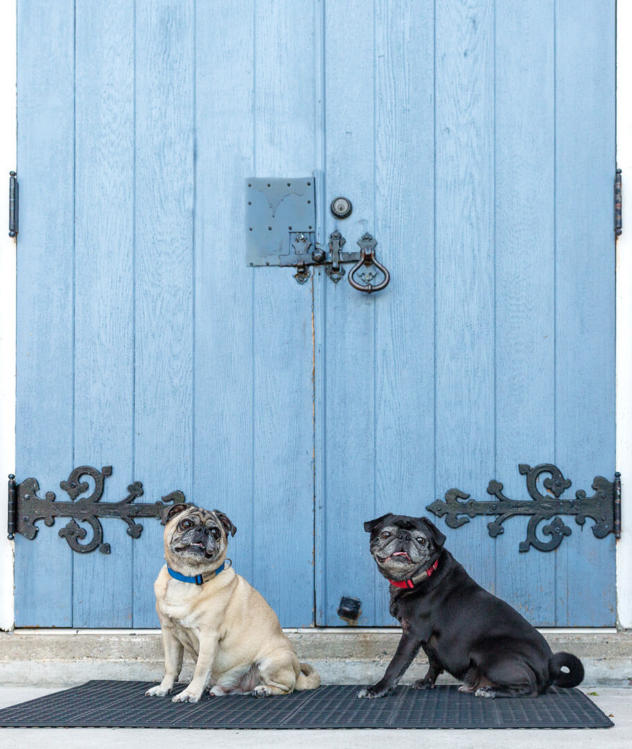 Pugs about Town, Unionville