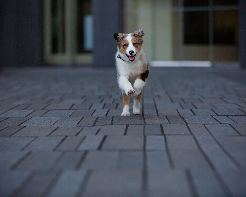 dog-running-toronto-photographer.jpg