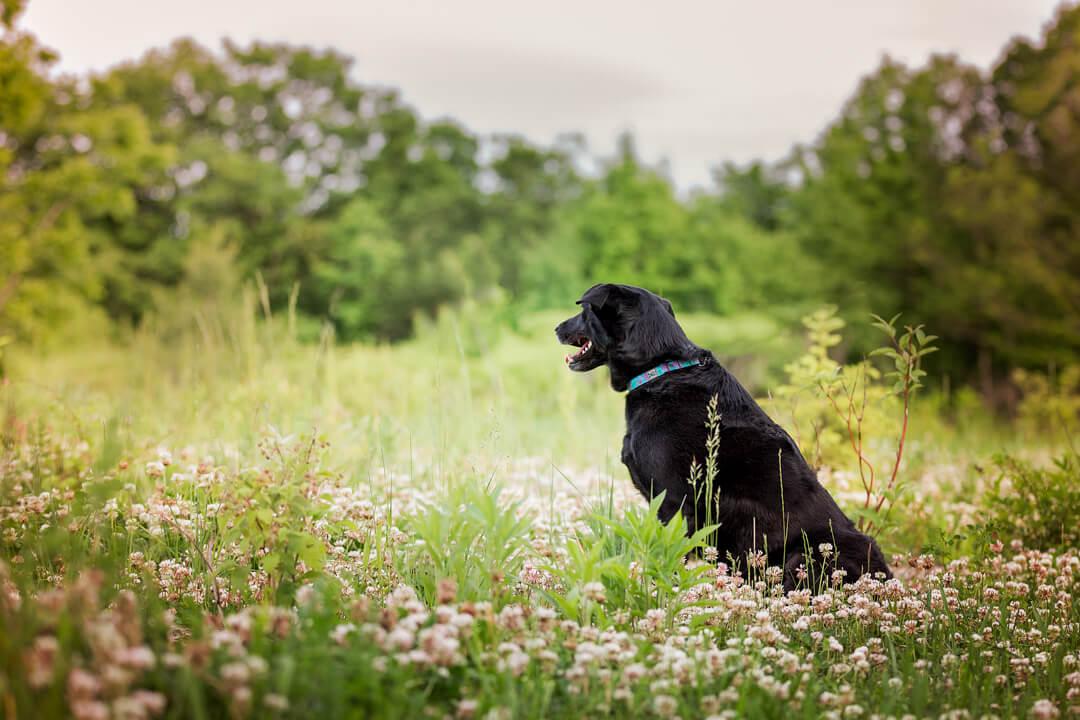 dog-photography-North York-negative-space.jpg