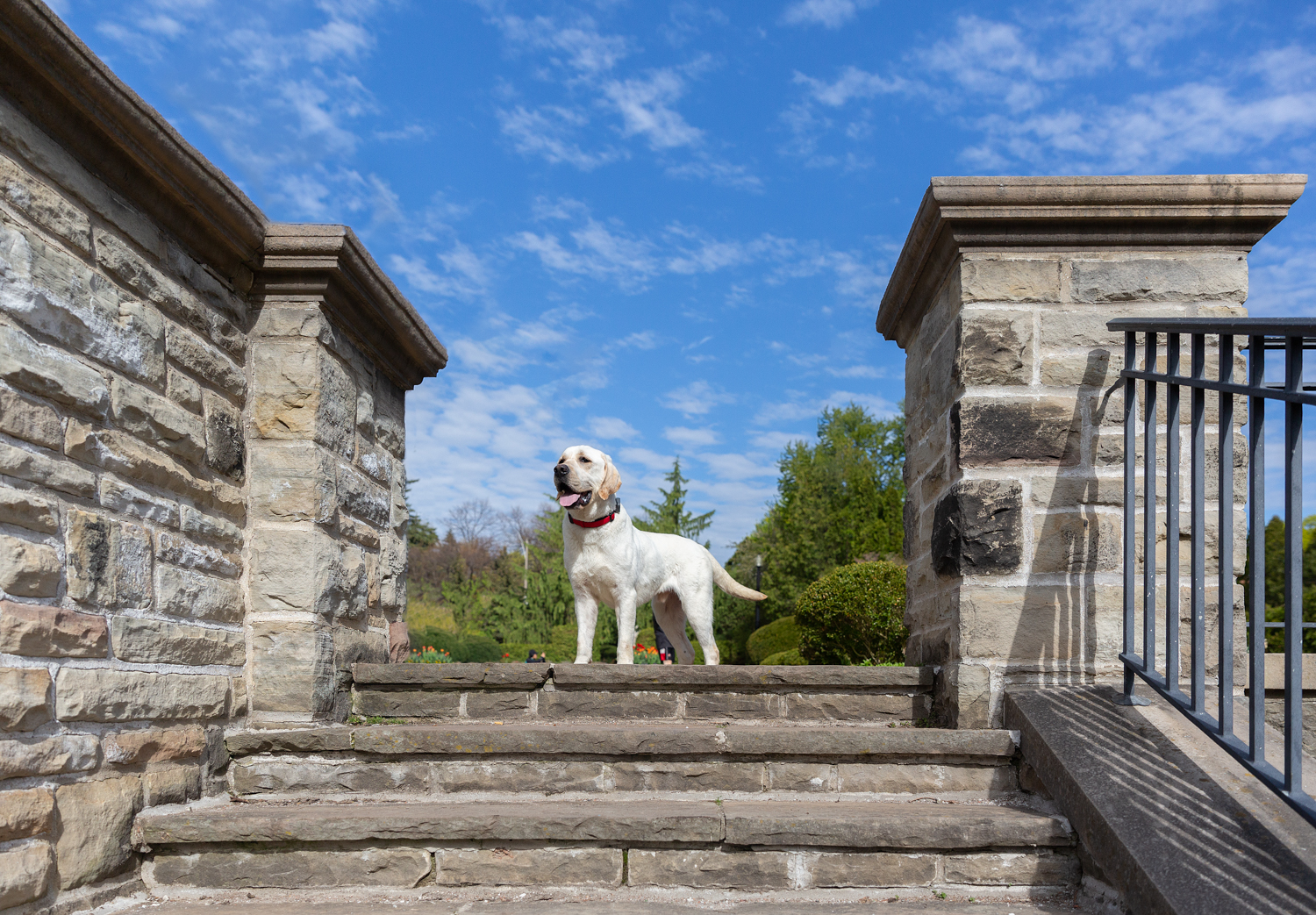dog-at-top-of-stairs-Alexander-muir-memorial-Gardens-Toronto-pho