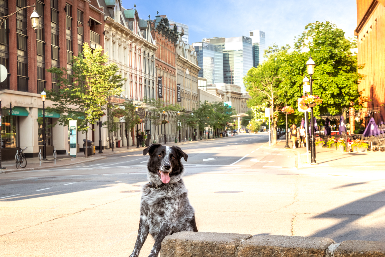 dog-in-the-city-portraits-Toronto