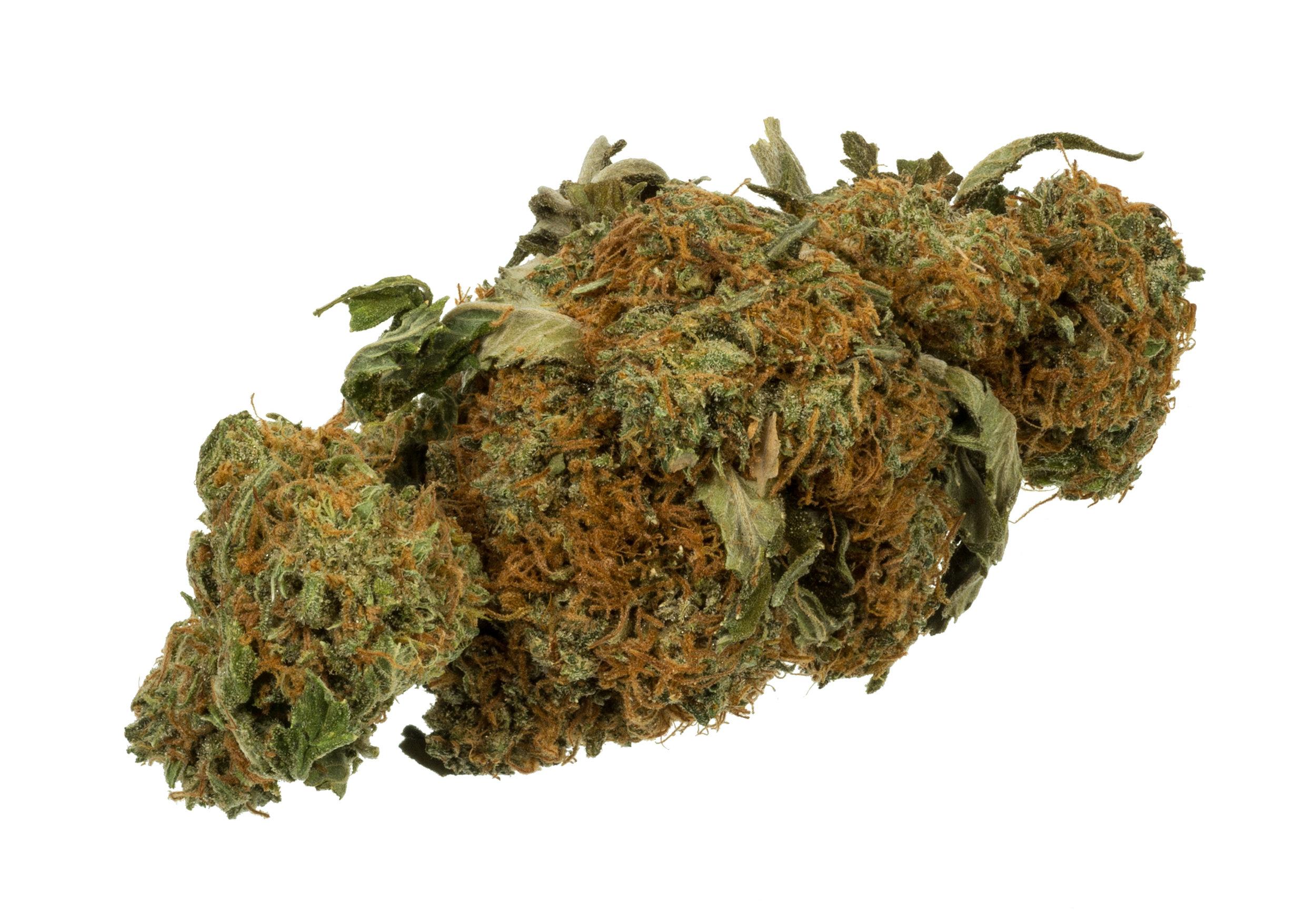 Dried cannabis leaves.