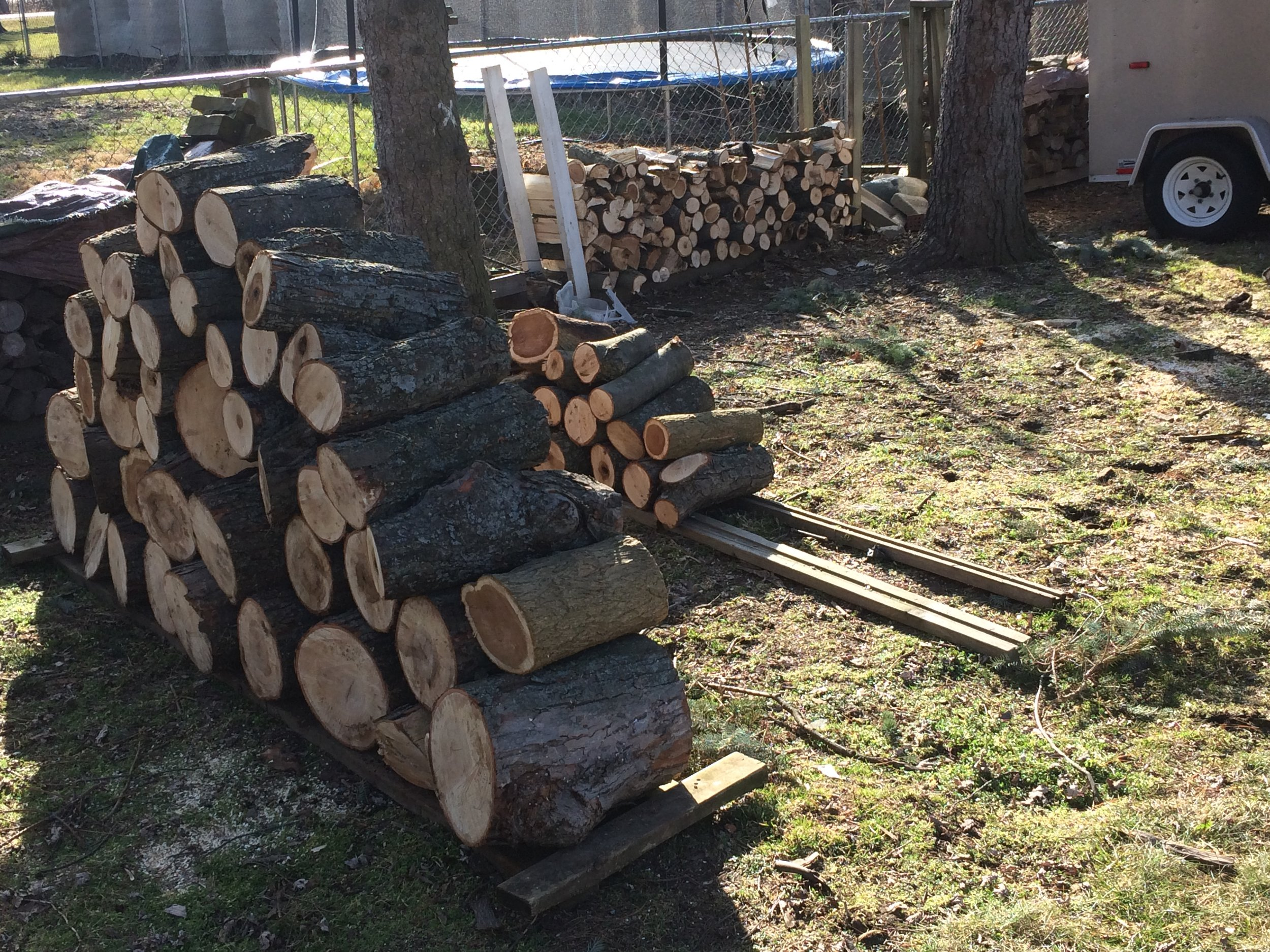 Firewood yield from unexpected tree-trimmer visit